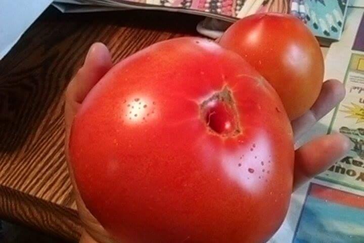 large tomato.jpg