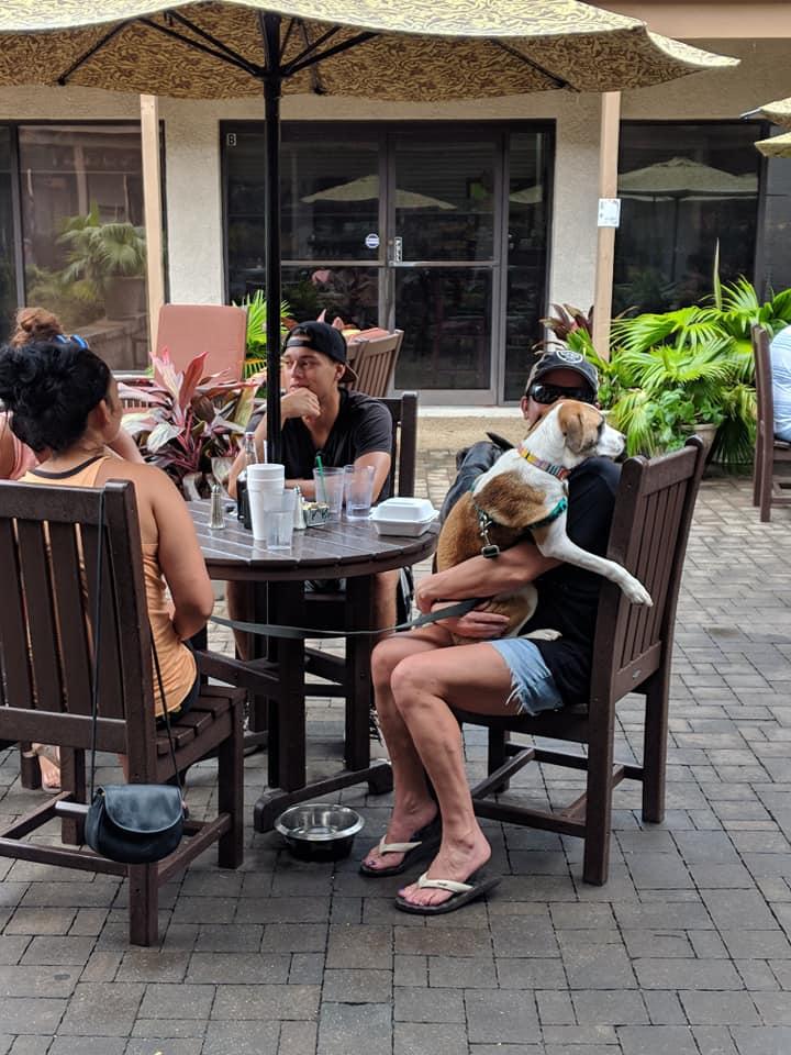 dog-friendly.jpg