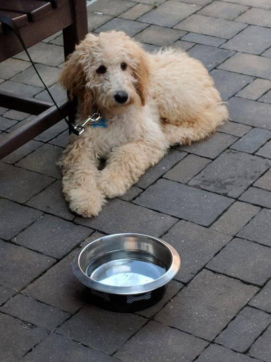 pet-friendly-patio-dining.jpg