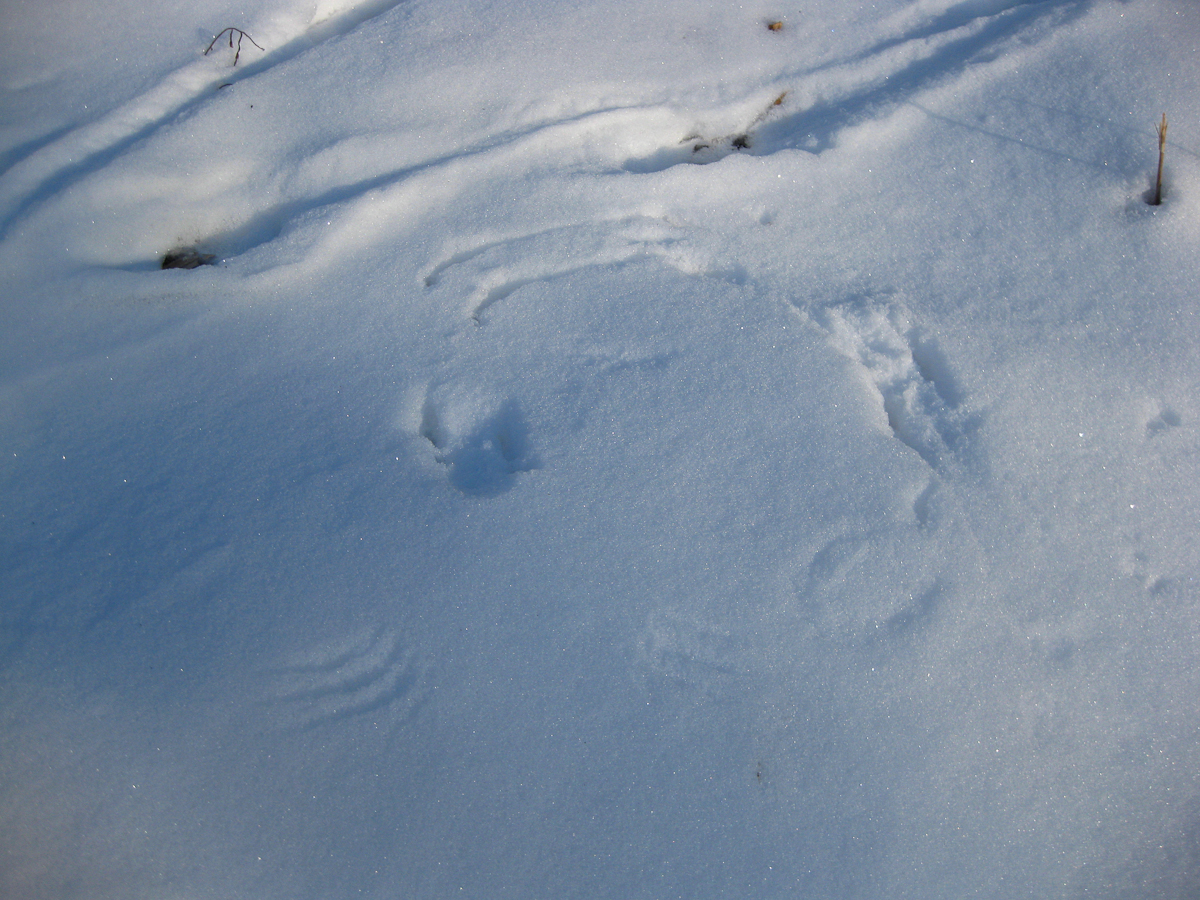 The tracks of bird wings astonish me every time I see them.