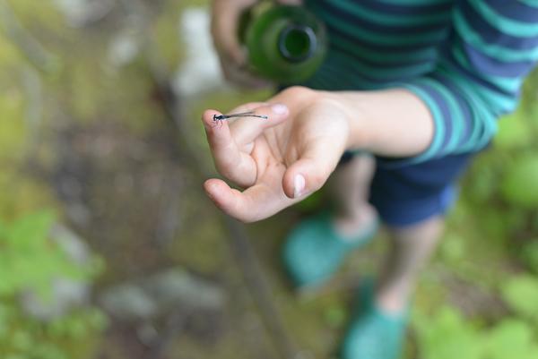 Damselfly on child's hand, May 27, 2019
