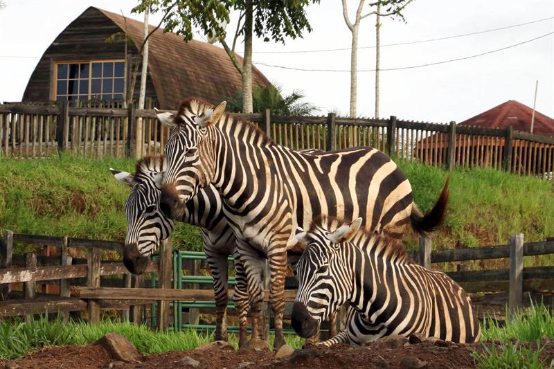 El %22Arca de Noé%22 busca salvar un zoológico que es herencia del narcotráfico en Honduras 1.jpg