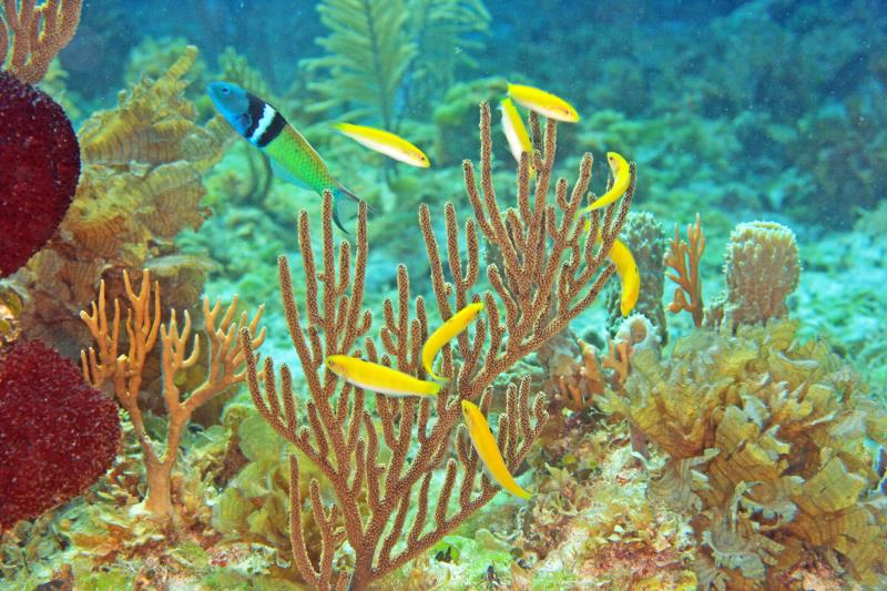 ocean species gender.jpg