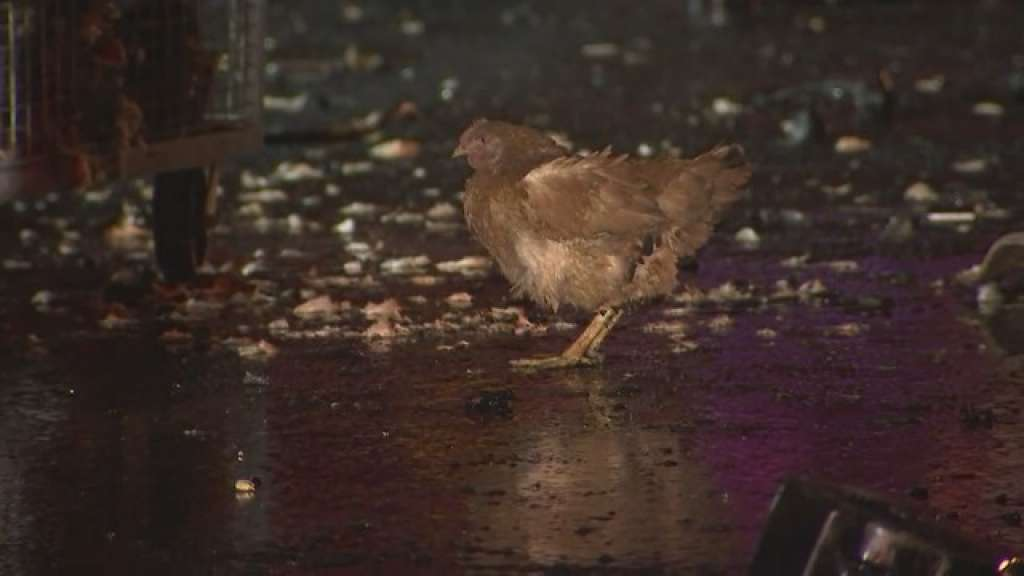 Chicken 2.jpg