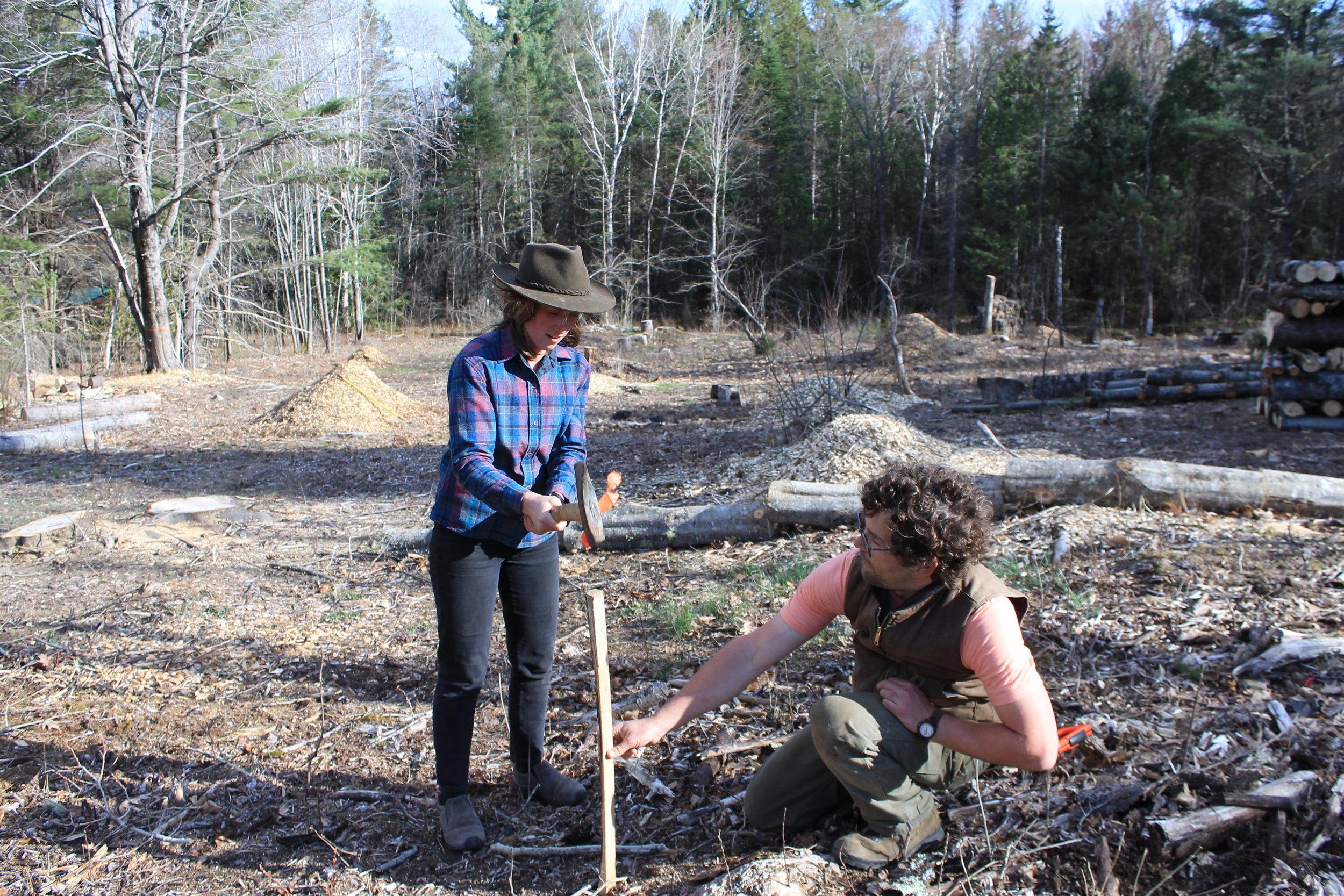 Abbey & Angus preparing a tree site @ Rocky Ground