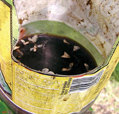 A soda bottle holding cider and molasses traps codling moths. photo by Jean English