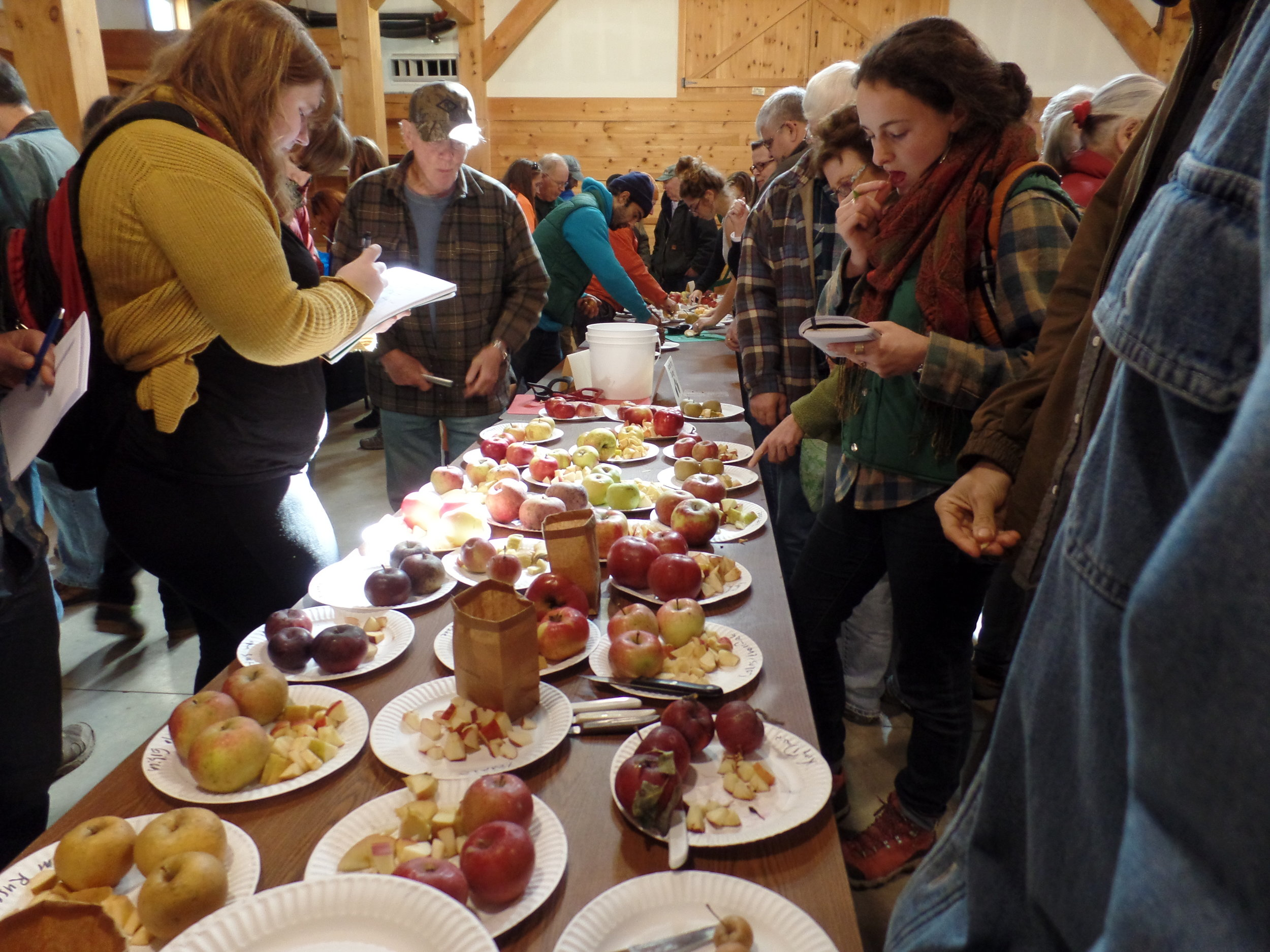 tasting apples at the 2015 Great Maine Apple Day