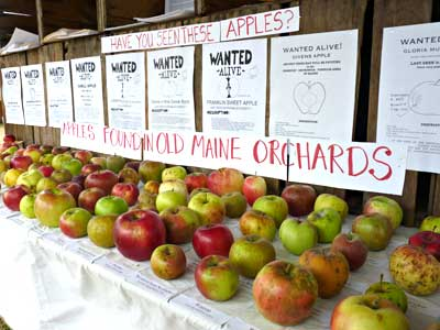 Apple varieties displayed at the Fair photo by Jean English