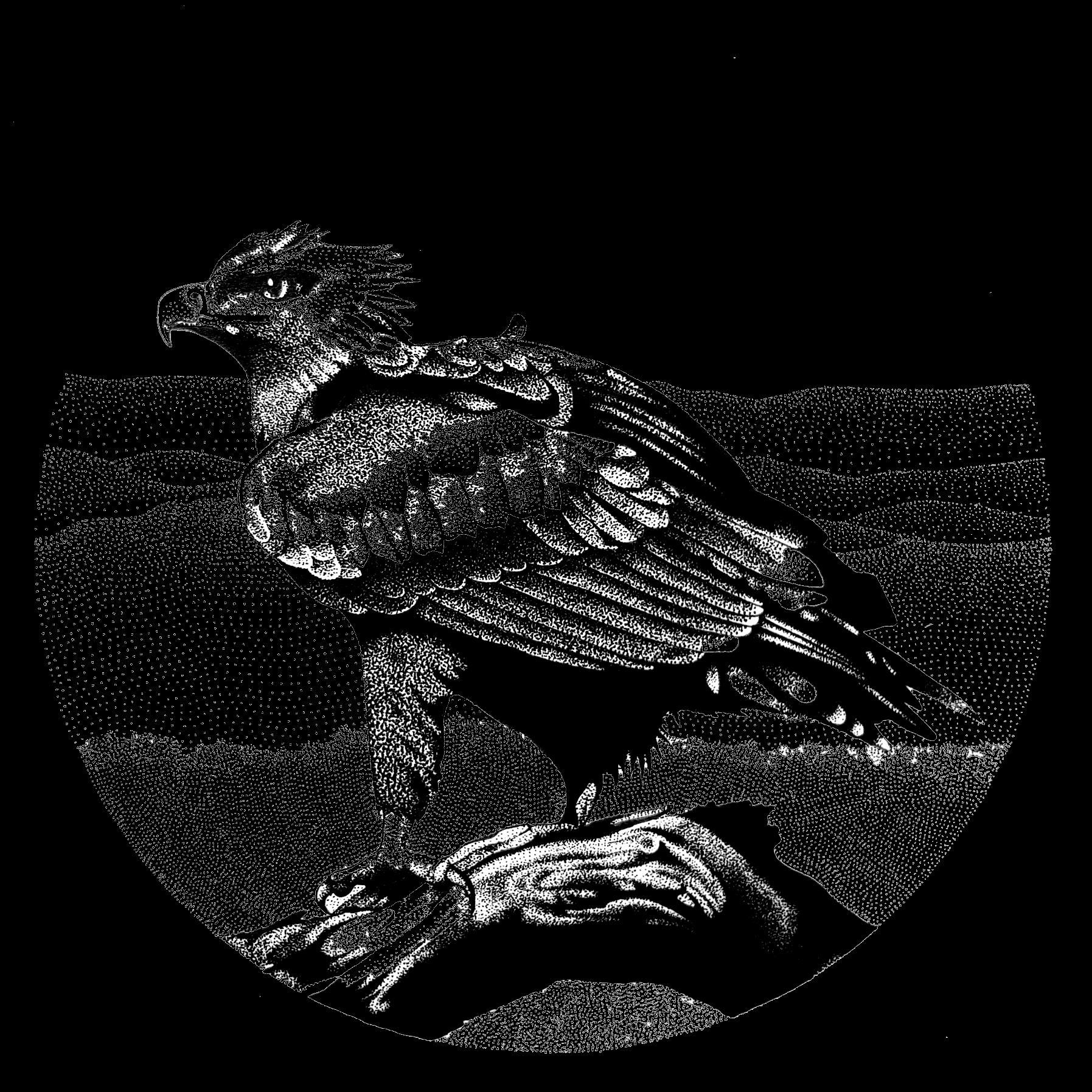 black-white-ink-illustrations-melbourne.png