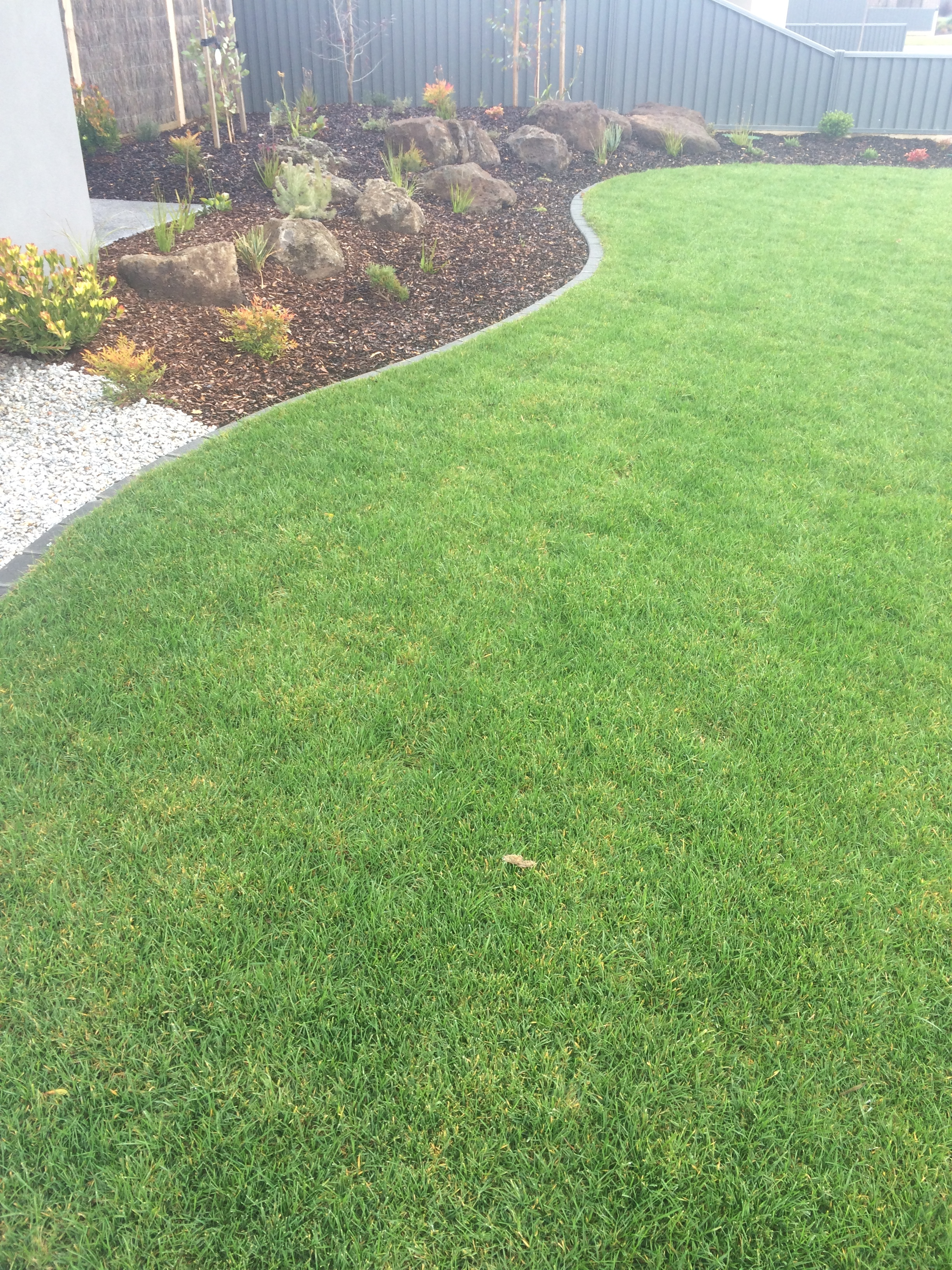 Garden and instant turf with bluestone edging