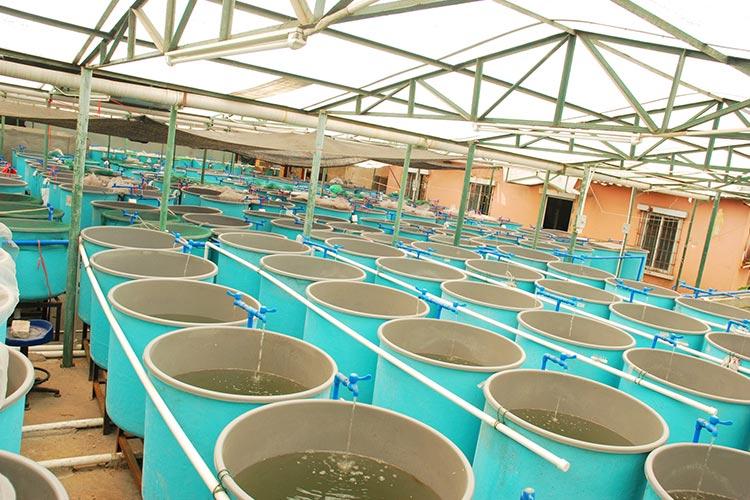 industrial-cooling-equipment-melbourne.jpg