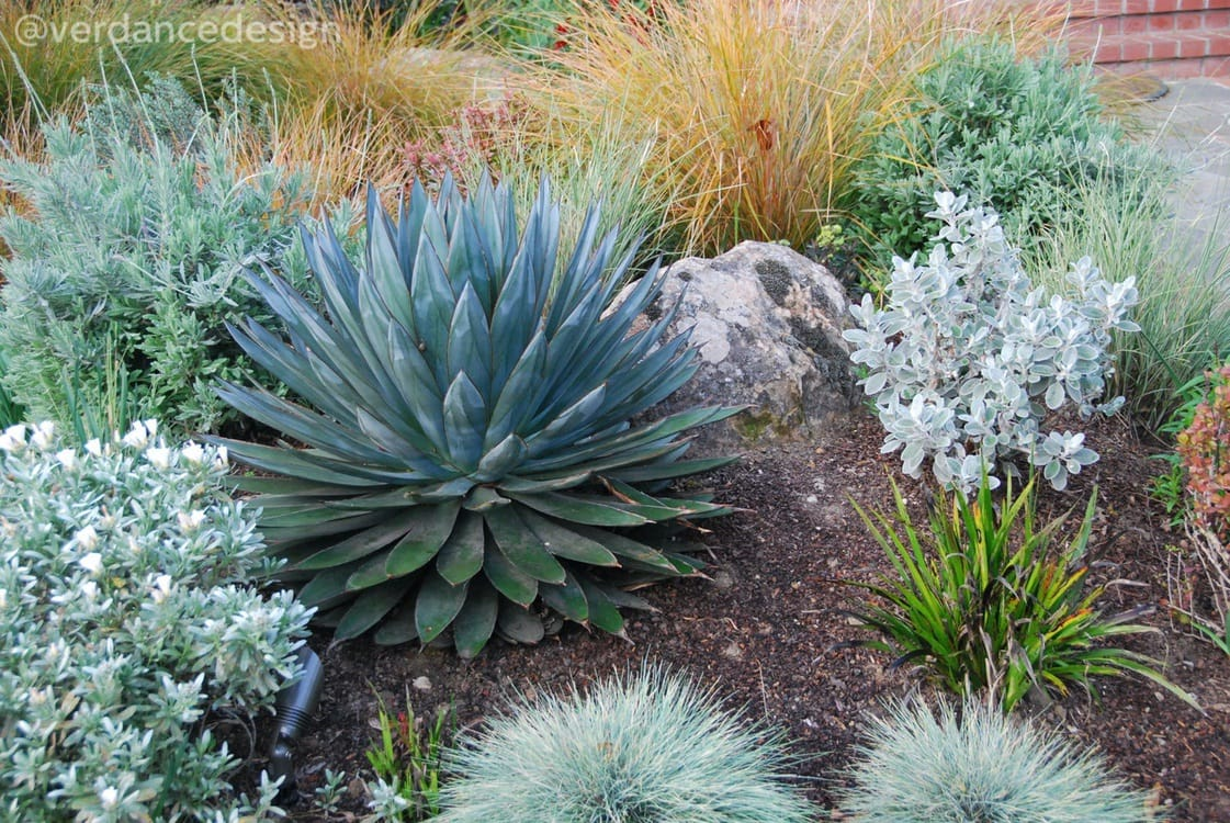 Gallery_BLA-front-garden-agave.JPG