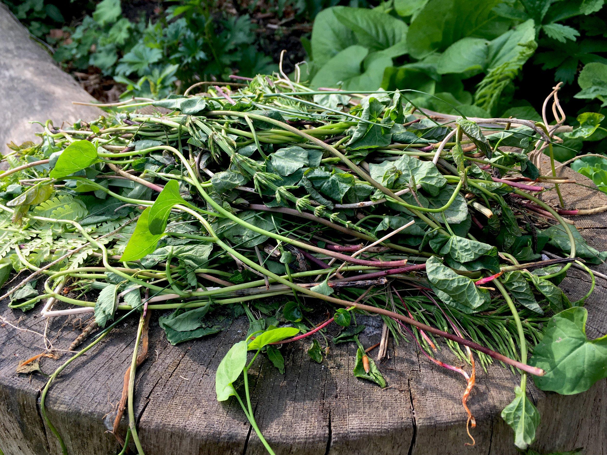 Lugning er en øvelse i repetition og tålmodighed. Hvis du fjerner de grønne dele af en plante, svækkes rødderne, som skal bruge energi på at lave nye blade uden at få energi fra fotosyntese. Jeg lader ukrudtet tørre i solen og smider det på komposten eller brænder det. Du kan også smide det i en spand med vand et par uger, så dør alle rødder og frø, og det kan komme på komposten. På den måde bliver ukrudt til ny krudt, som kan komme de andre planter i haven til gavn.