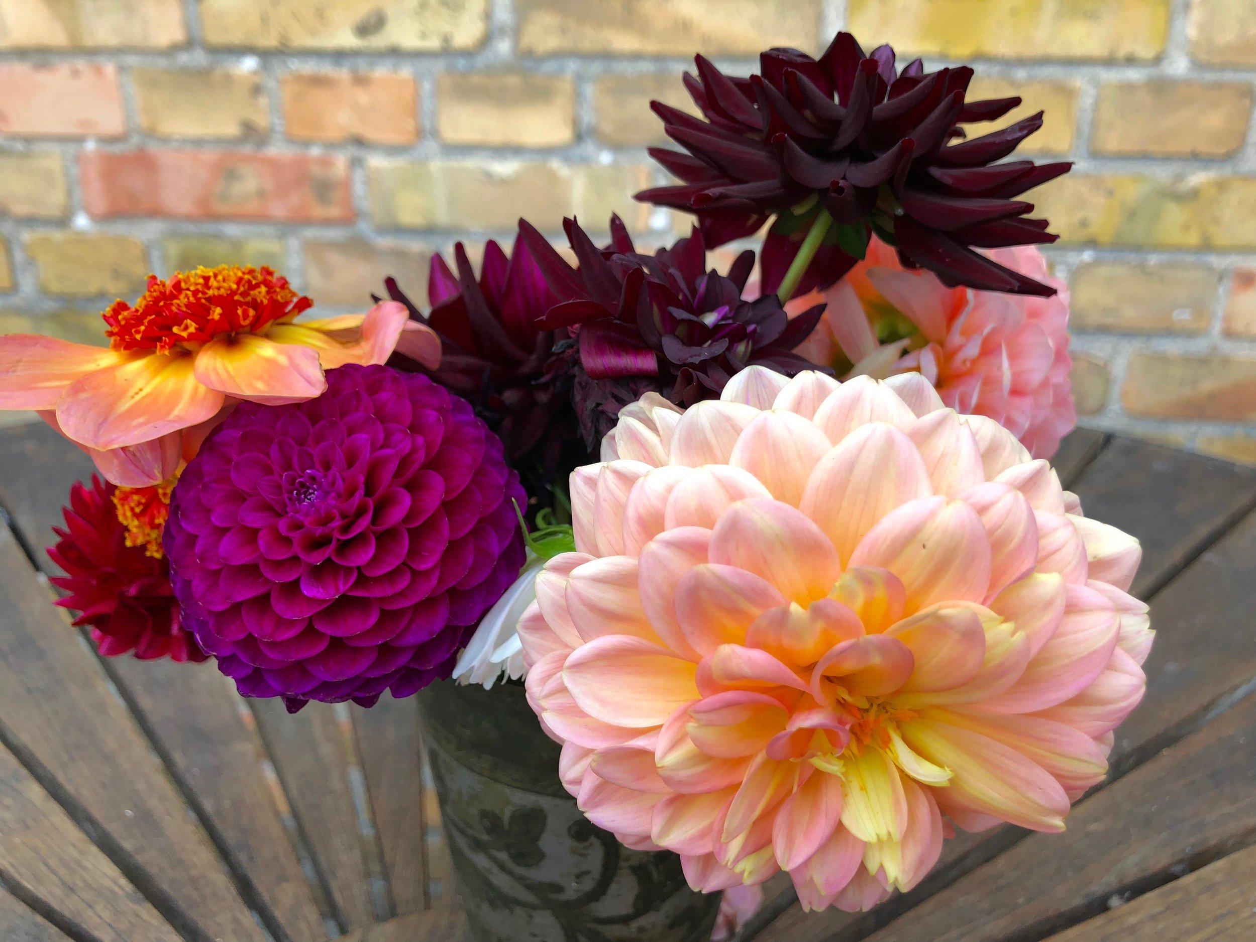 Jeg har været i haven for at plukke blomster i nogenlunde samme farver for at få en fornemmelse af, hvordan farverne ser ud sammen. Her er det georginer.