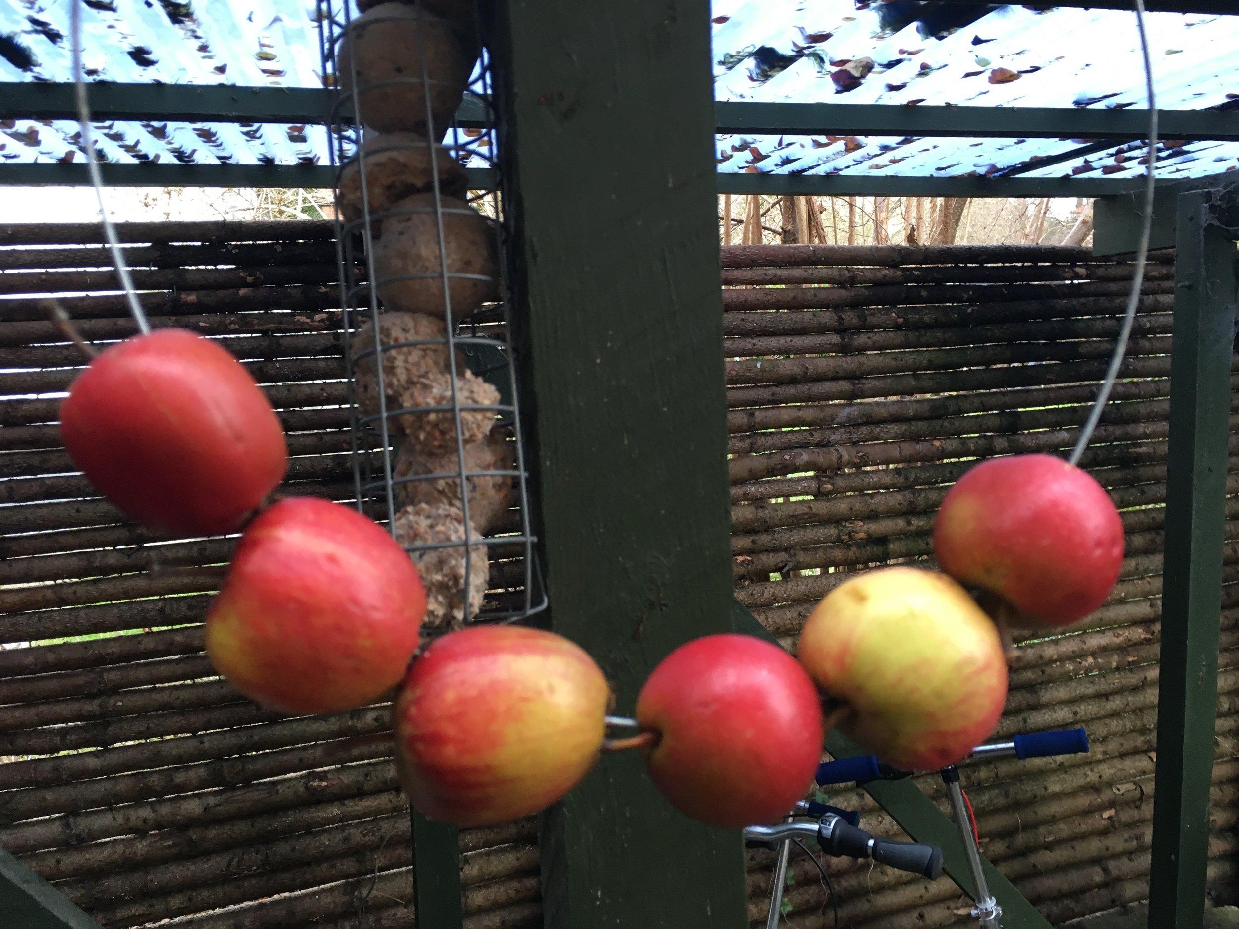 Du kan også trække æbler på et stykke kraftig ståltråd. Dem kan fuglene også godt lide - især solsortene og rødhalsen.