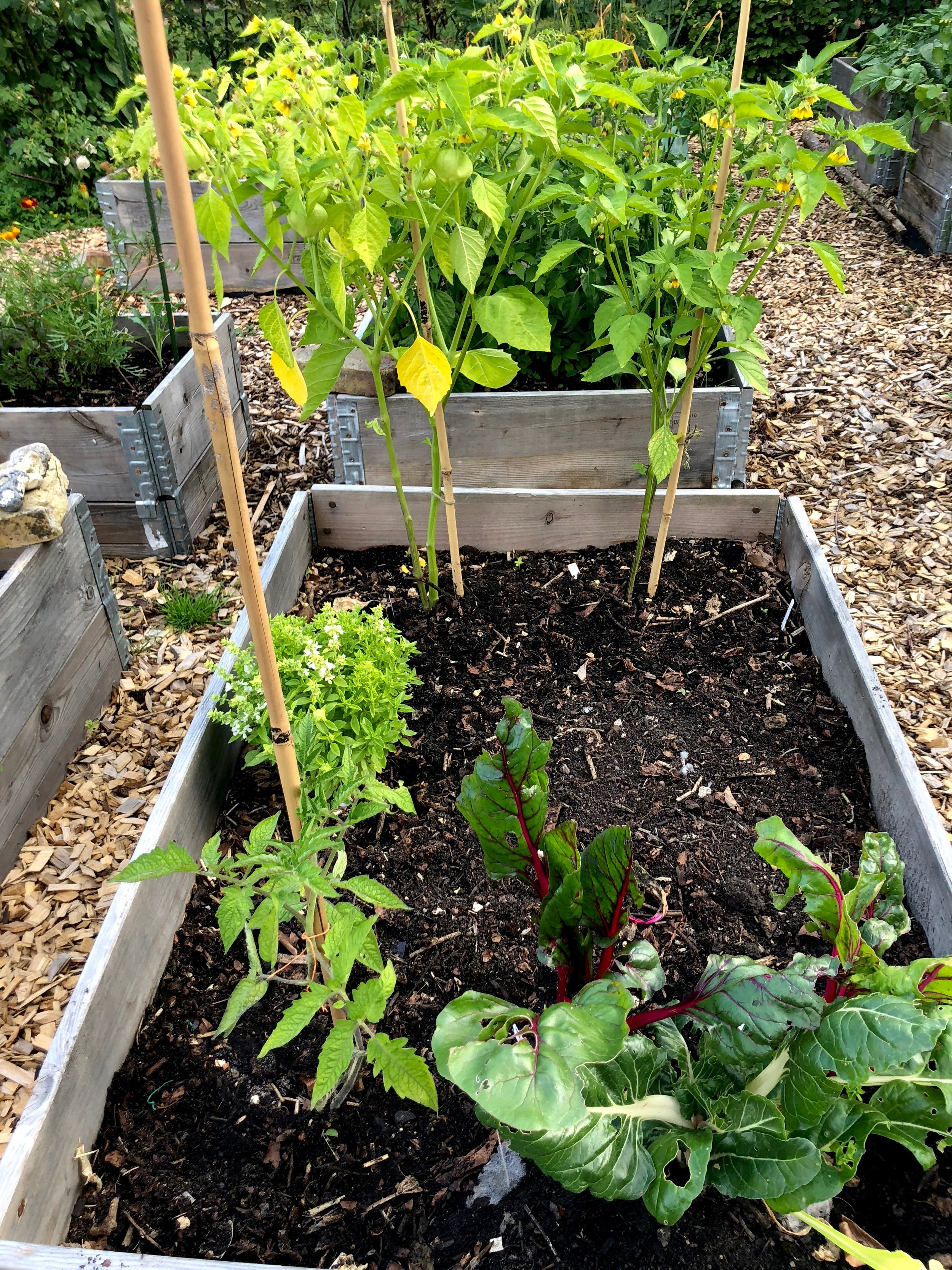Forrest er det bladbede. Når man høster de yderste blade, så skyder planten fra midten, og på den måde kan du høste af den over lang tid. Det samme gælder salat, som jeg har været inde på, og spinat.