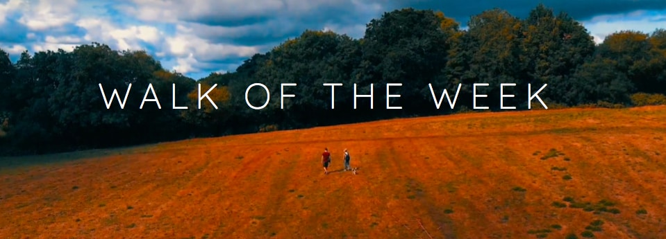 Drone photography of Nant Fawr woods in Cardiff with 'Walk of the Week' written across the photo.