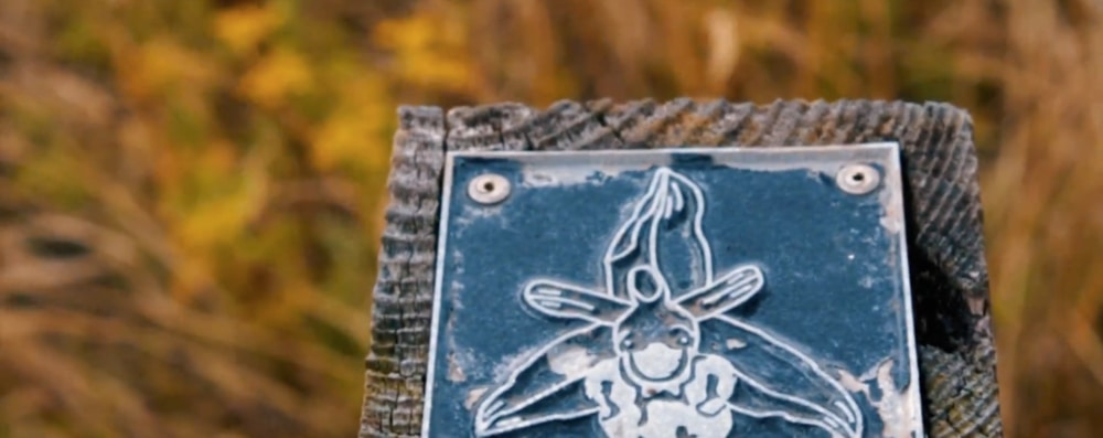 photograph of a wildlife rubbing stamp in Cardiff taken from video series,  Walk of the Week .