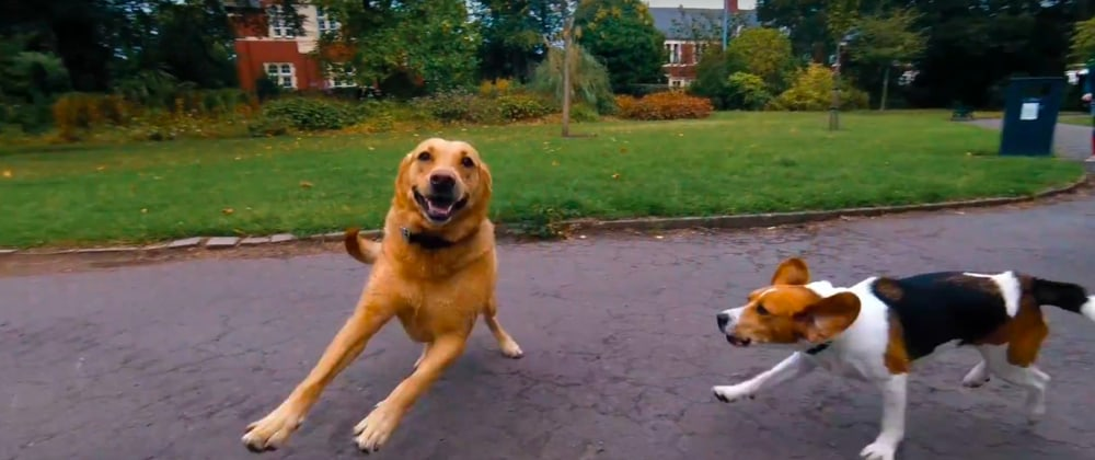 Screenshot taken from Walk of the Week, episode 4: Roath Brook Gardens. Marley is chasing his best friend Daisy, and they are both having so much fun. Waterloo Gardens, Cardiff.