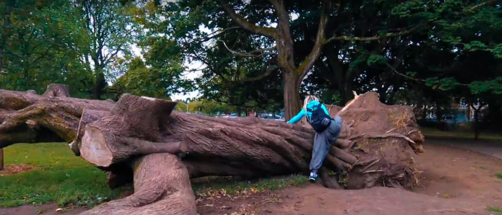 Screenshot taken from Walk of the Week, episode 4: Roath Brook Gardens. Beth climbs a tree that blew over in a storm; now a centre piece of the park. There is  plenty  to explore here for you and your dog!