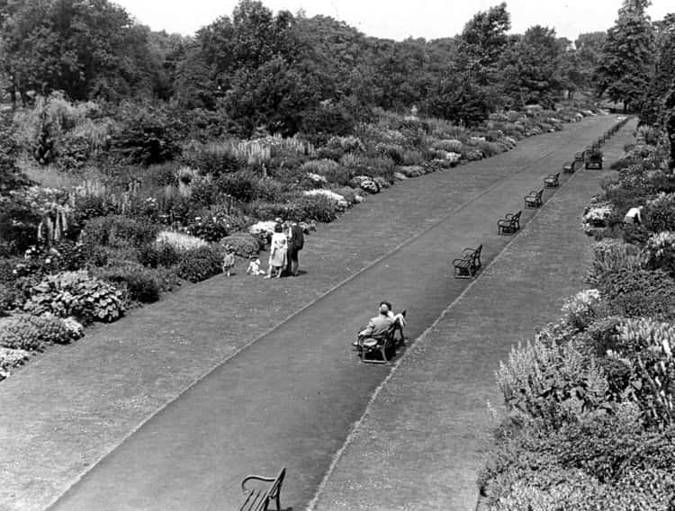An Old black & white photograph of the herbaceous border in Bute Park, before one side was reduced to islands. It was considered the longest in Wales.