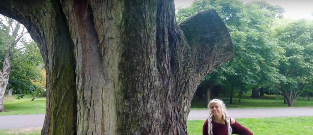Screenshot taken from Walk of the Week, ep 5. Bute Park. The massive trunk of a Champion Tree, in comparison to Beth.