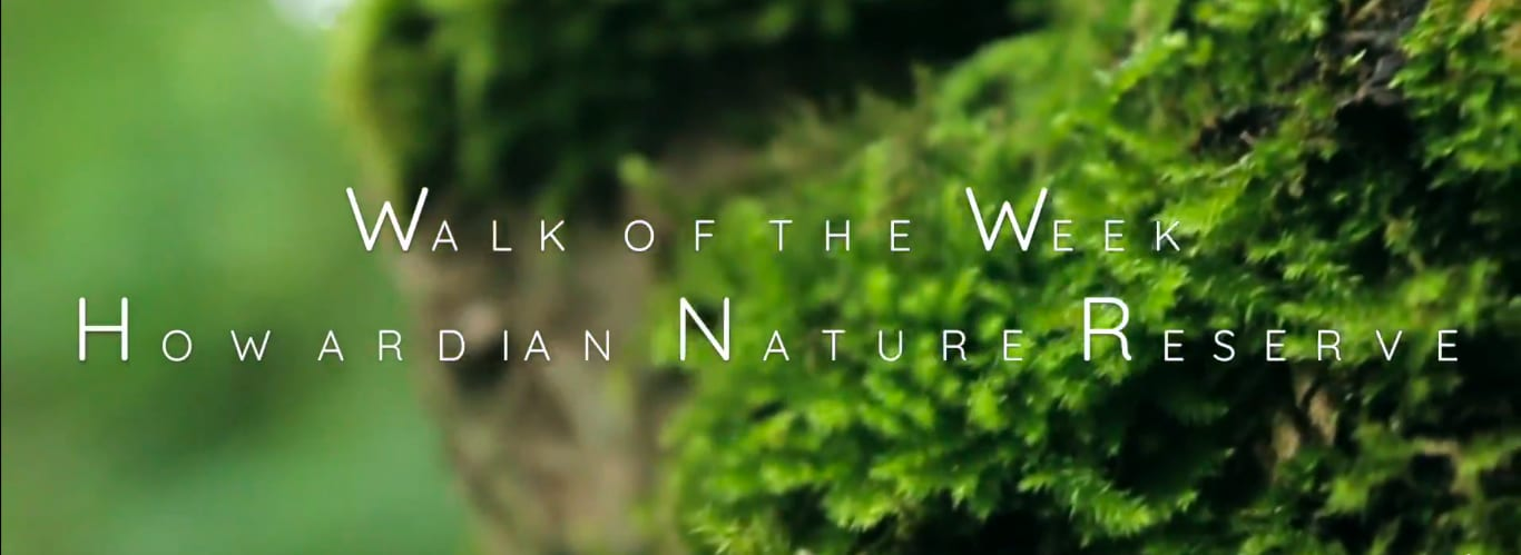 Screenshot taken from Walk of the Week, Howardian Nature Reserve. Close up of moss growing on the tree's.