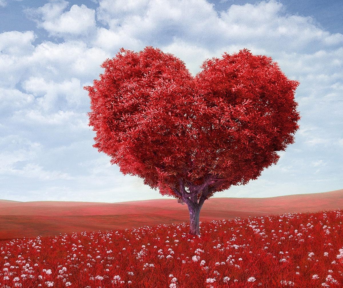 SBurrell_Blog_GuiltShame_HeartShaped_RedTree.jpg