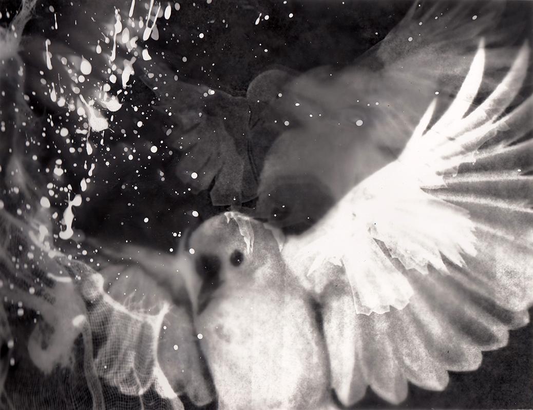 'Flight Interrupted'  Photogram 297x210mm
