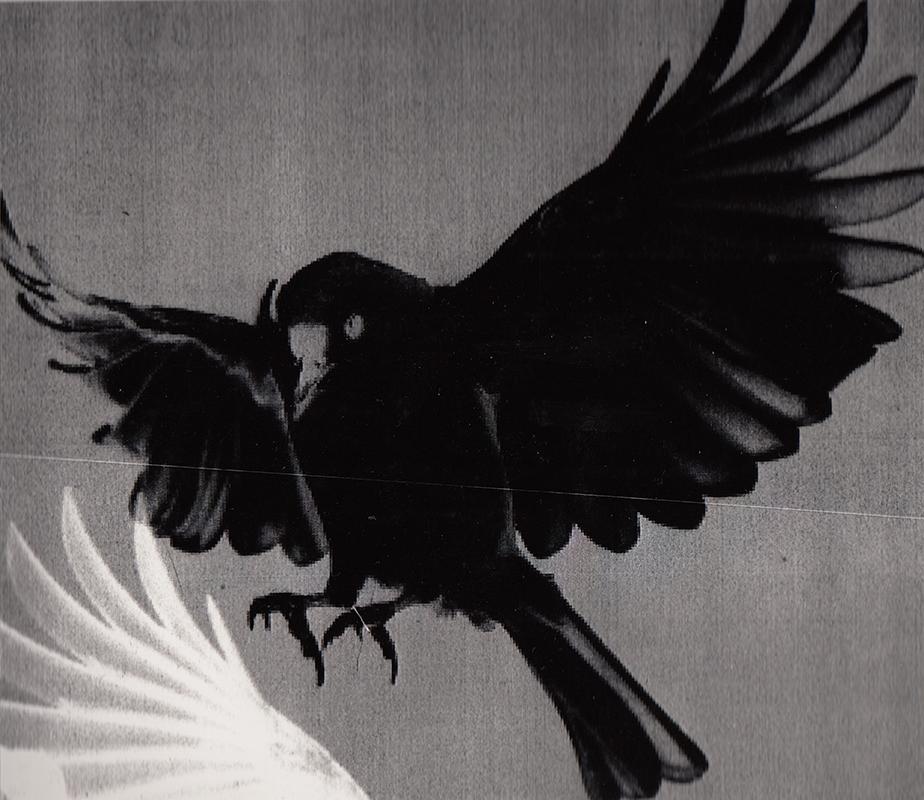 'Flight 1'    Photogram 297x210mm
