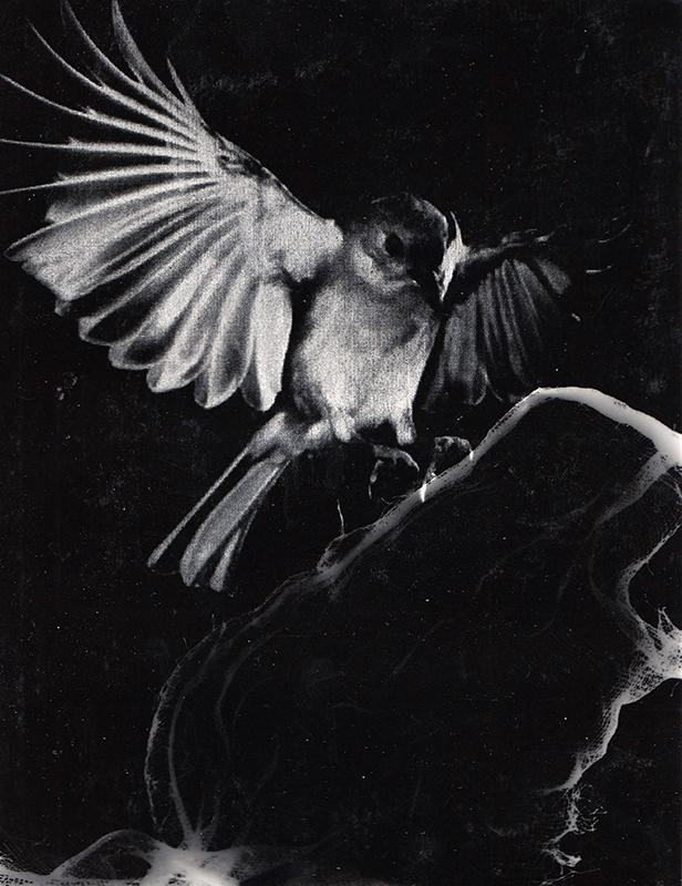 'Flight 2'  Photogram 297x210mm