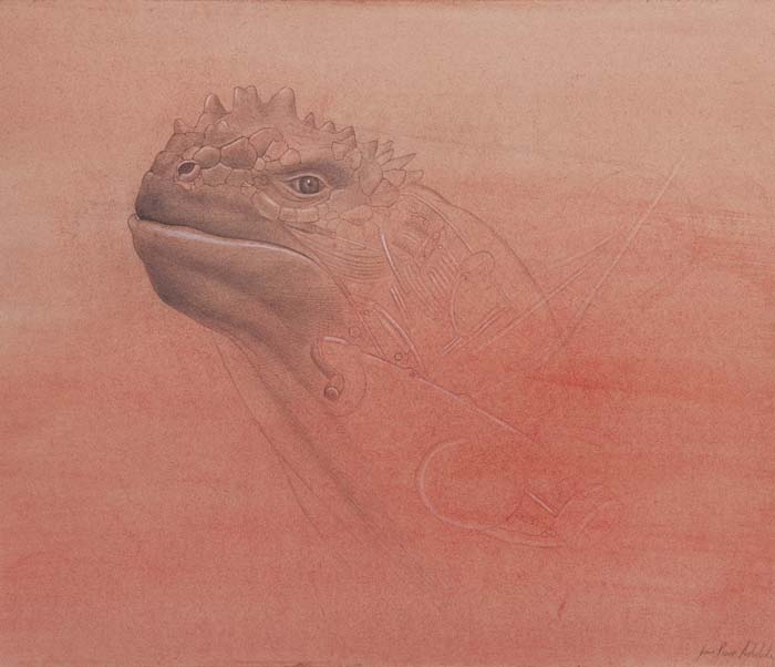 """Iguana Mecanica De Galapagos"""