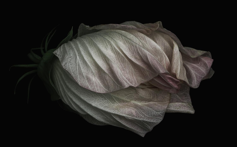 _MG_3702-hibiscus-art-1-website.jpg