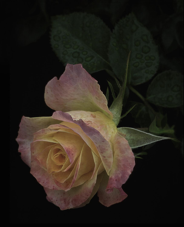 Doug-Rose-website.jpg