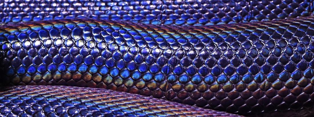 rattlesnake2.jpg