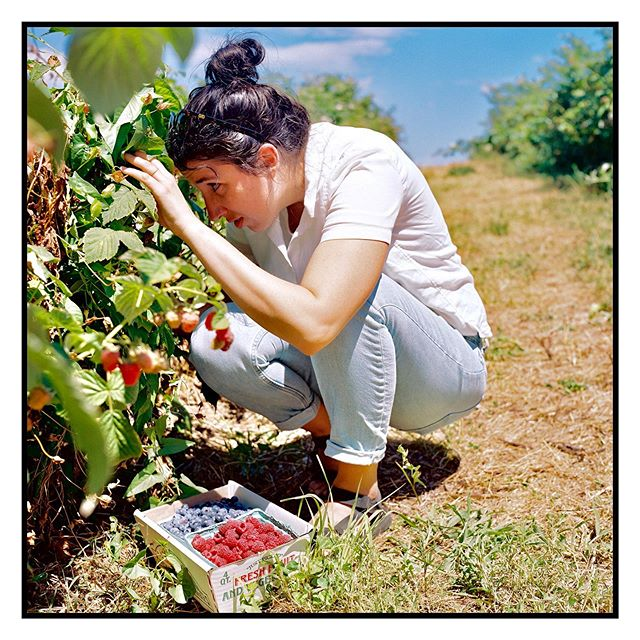 Just Kate picking some berries last year.