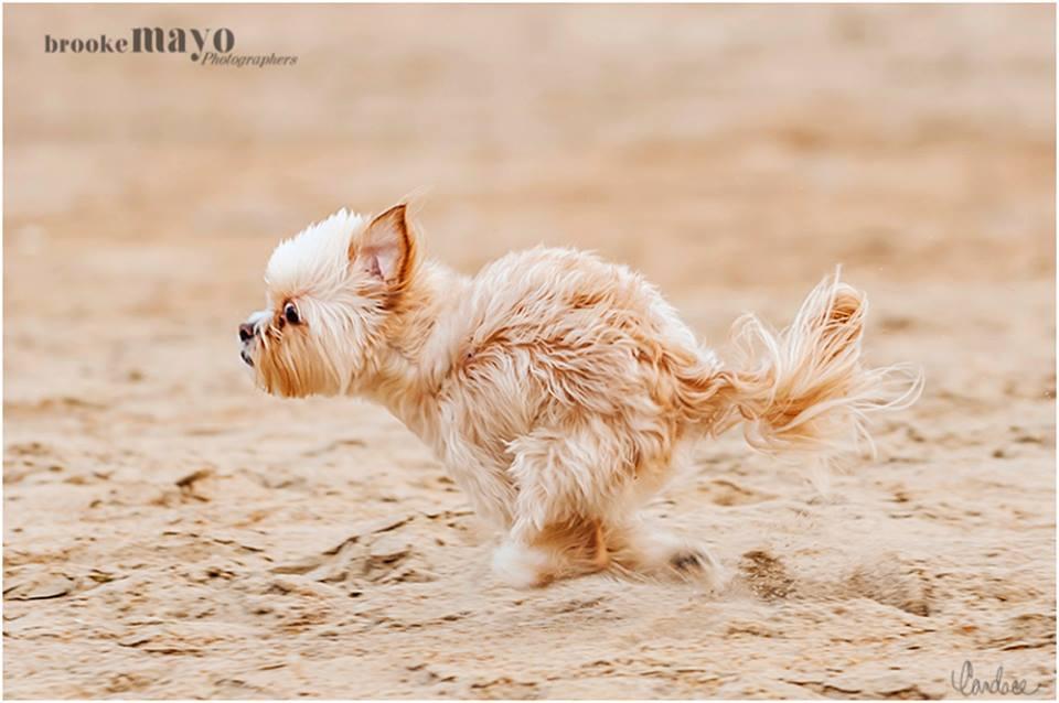 outer banks beach dog