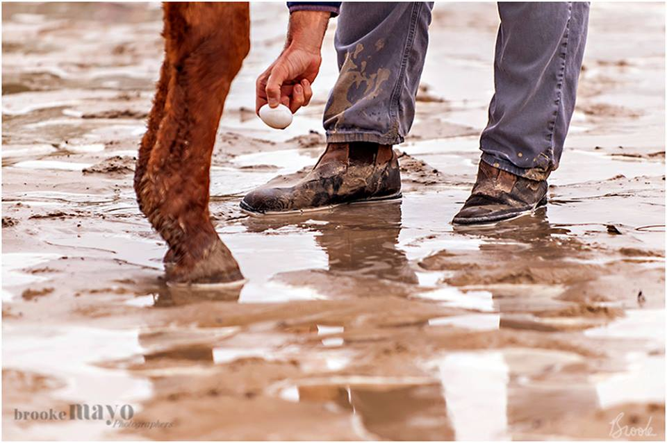 Muddy horse show