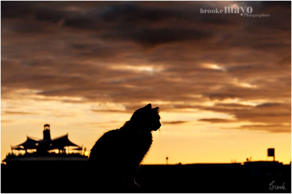 gran canaria cat