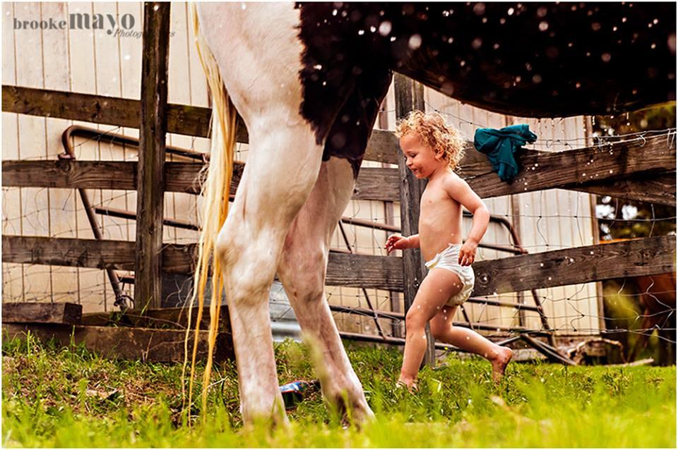 horse bath time