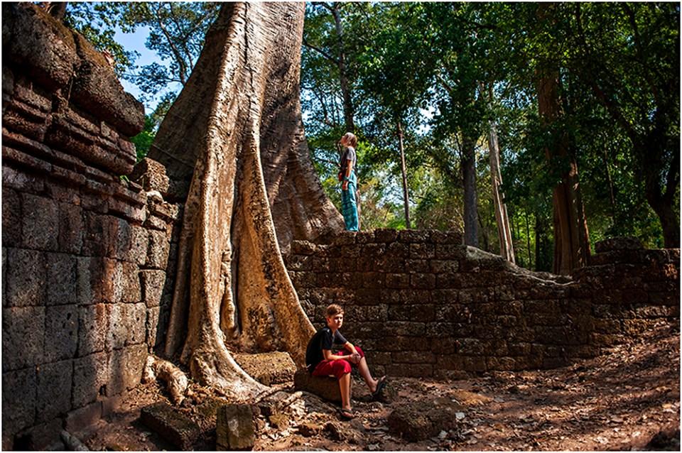 angkor wat tree temple