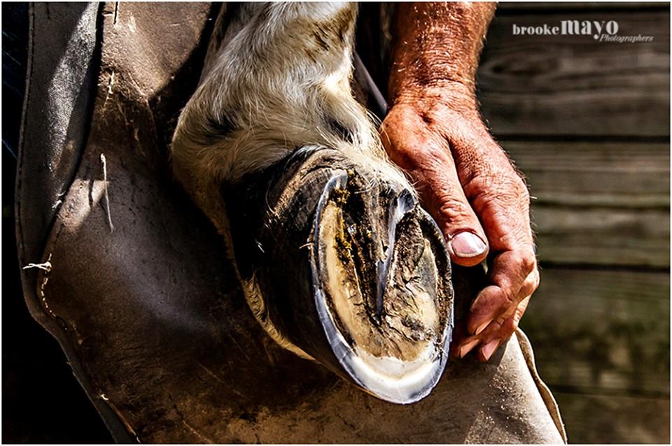 horse ferrier