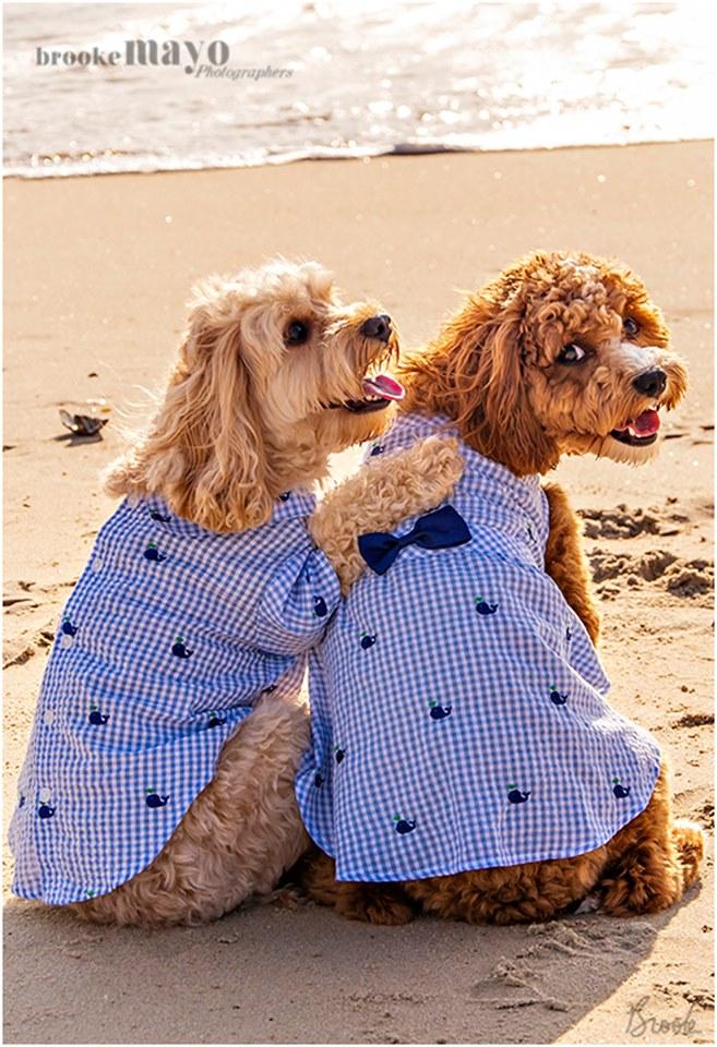 Outer Banks Dog portraits