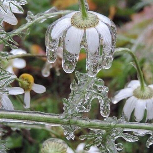 Your glory is so beautiful . . . . . #daisies #spring #flourish #bloom #life #born #mood #earth #flowers #shared_joy #joy #everlastinglife