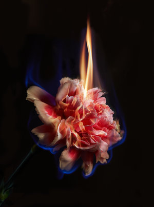 Image ©Mat Collishaw, Effigy  Nature Morte curated by Heather Griffin