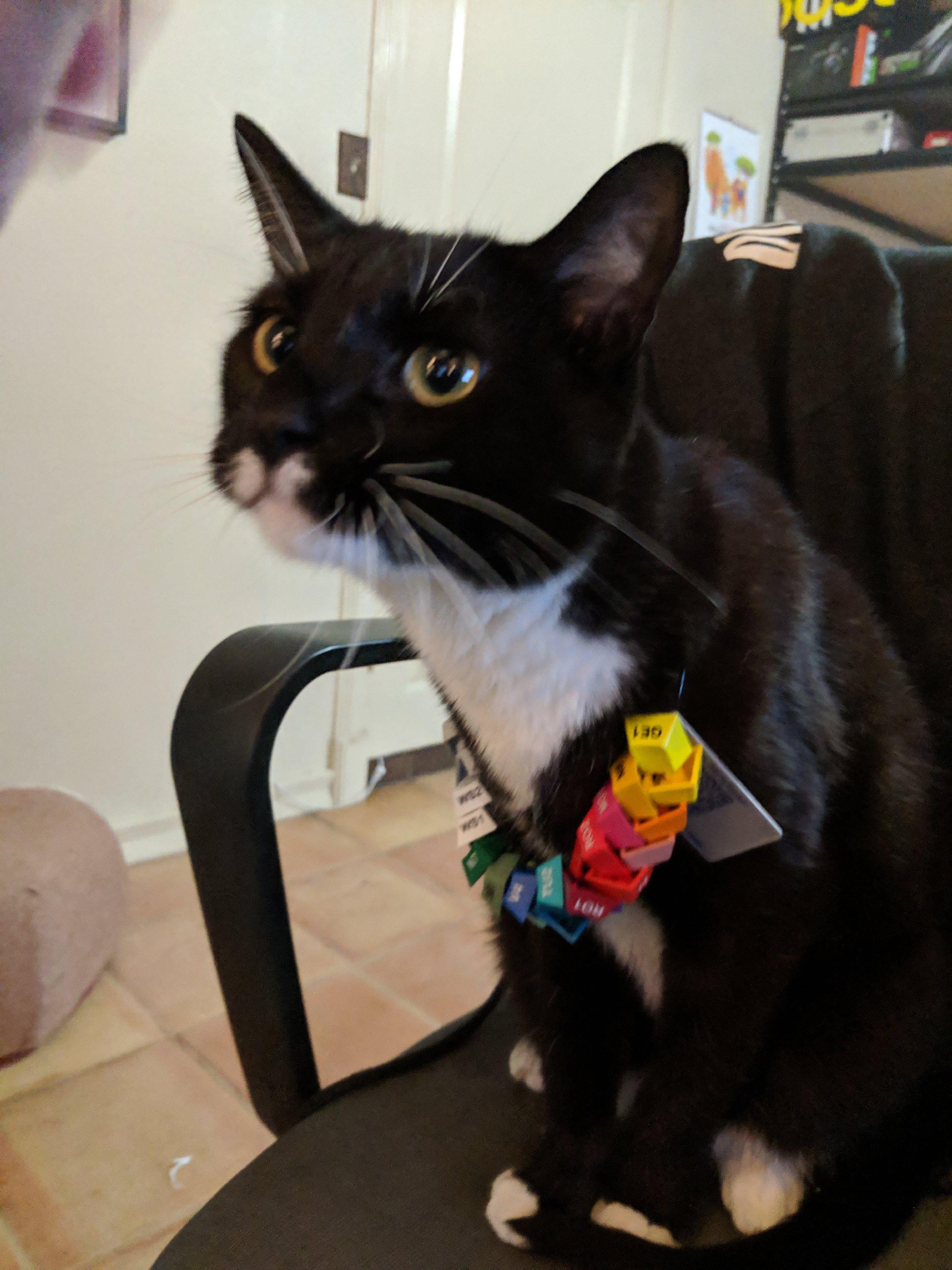 Death Cat harassment