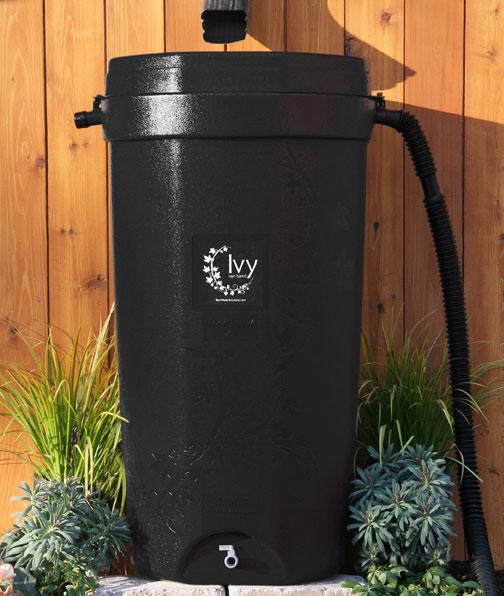 ivy-rainbarrell