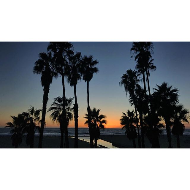 LA, you've been good to me #sunset #santamonica #palmtree #silhouette #cinematography #documentary #oliveleaks