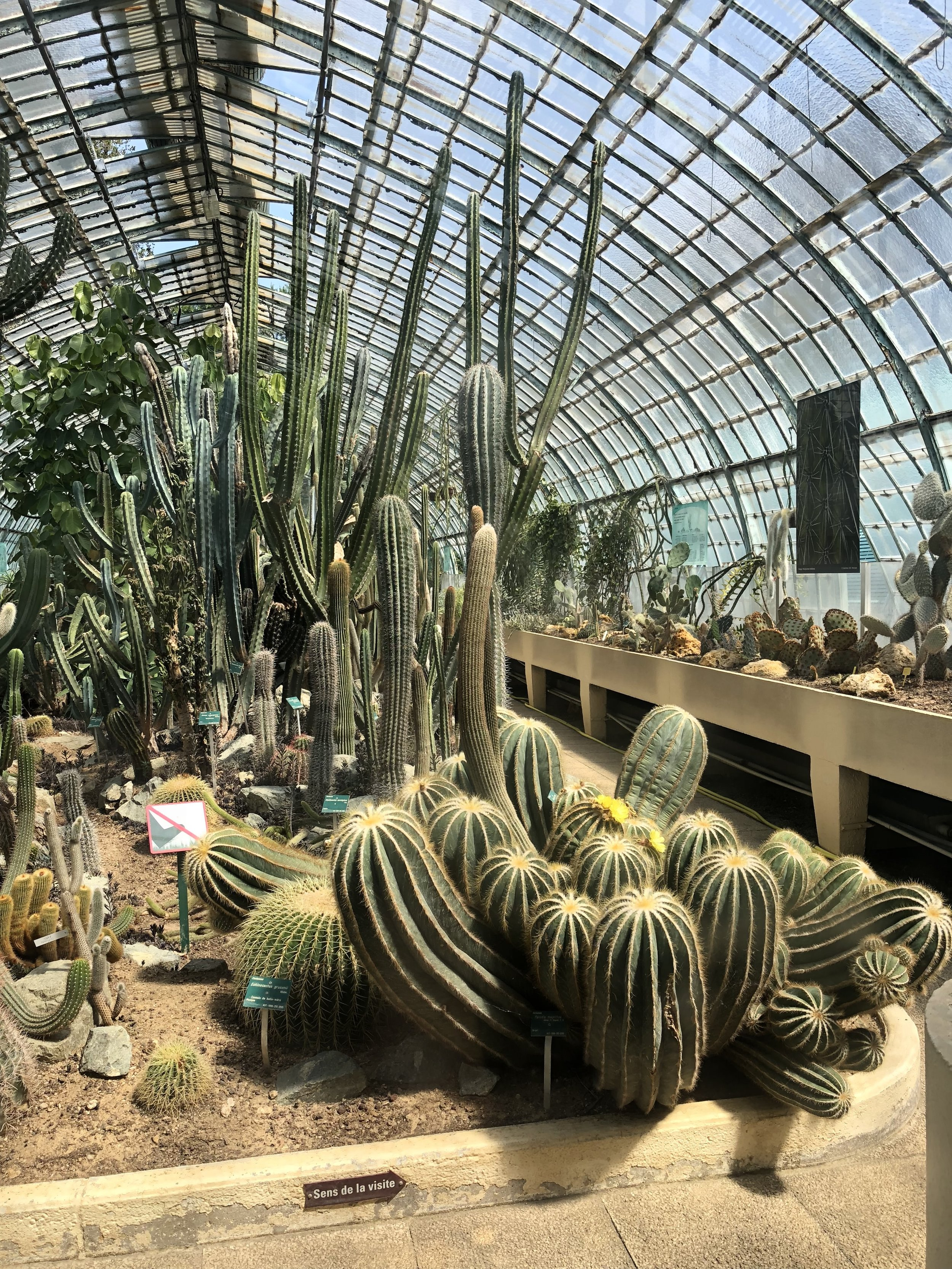 A desert greenhouse at the Serre d'Auteuil gardens