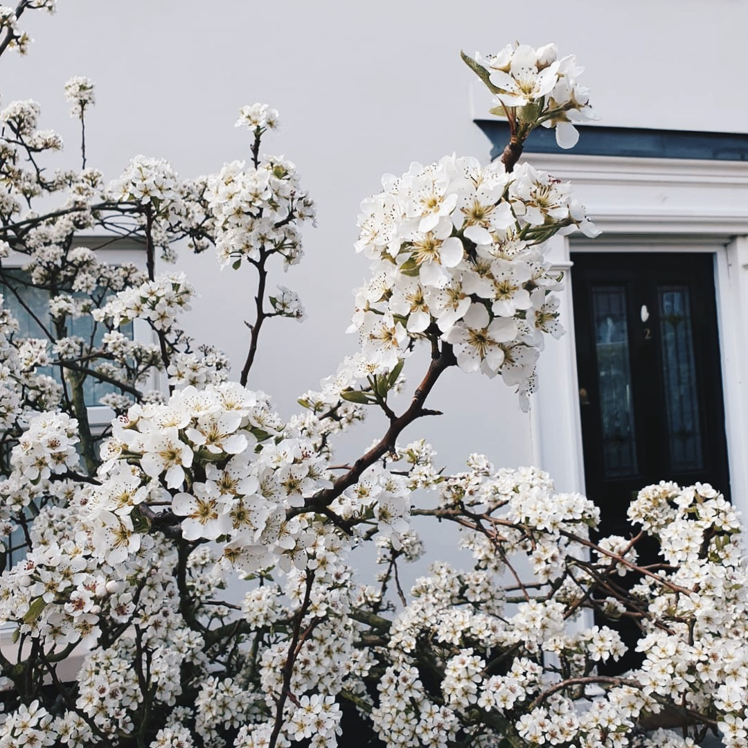 Five Things to Do this Spring Katy Lagden The Attic on Eighth 2019.JPG
